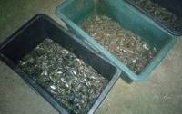 На Николаевщине браконьеры выловили рыбы на 1,2 млн грн