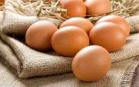 Украина стала меньше продавать яиц
