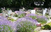 На Волыни мужчины воровали цветы с кладбища для продажи