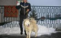 Харьковчанин наткнулся в приюте на своего пса, от которого избавилась теща
