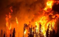 Названы вероятные причины лесных пожаров в Греции