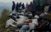 Удар молнии убил более сотни индийских овец