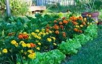 Какие цветы защитят ваш огород (фото)