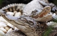 В Мексике крокодил утащил четырехлетнего мальчика под воду