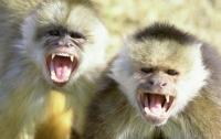 Дикие обезьяны внезапно напали на мужчину (видео)