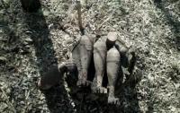 В Запорожской области нашли несколько снарядов прошлых войн