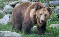 Медведь пустился в пляс в честь теплой погоды и попал на видео