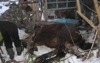 На Тернопольщине конь «нырнул» в шестиметровый колодец (ФОТО)