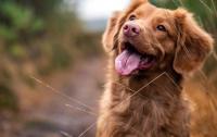 Владельцы собак живут значительно дольше – ученые