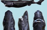 Океанологи виявили новий вид акул, що світиться у темряві
