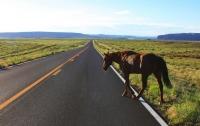 Обогнали автомобиль: в Запорожье по проезжей части бегали лошади