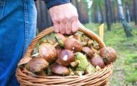 Жители Запорожской области попали в реанимацию, съев грибы