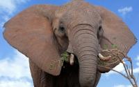 Дикий слон атаковал туристический автобус в Китае (видео)