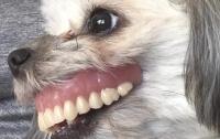 Собака со вставной челюстью напугала и развеселила пользователей Сети
