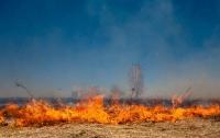 Стена дыма: в Одессе на пляже случился пожар (видео)