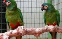 Гражданин России заставил молчать попугая с помощью скотча