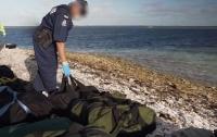 Тюлень помог полицейским задержать контрабандистов