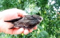 На Полтавщине дети спасли птенца одной из самых быстрых птиц в мире