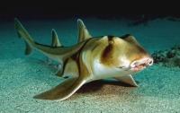 В США из аквариума в музее украли живую акулу (видео)
