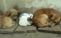 Бездомных животных приютили на фабрике