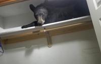 В США черный медведь пробрался в частный дом и заперся изнутри
