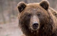 Житель Канады отбивался от медведя луком и стрелами (видео)