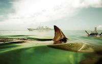 Украина восстанавливает программы подготовки боевых дельфинов