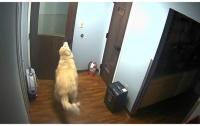 Умный пёс совершил побег из клиники для животных (видео)