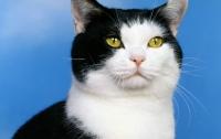 Кот угодил в тюрьму из-за неконтролируемой любви к еде