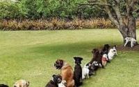 Открылись общественные туалеты для собак