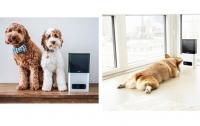 Гаджеты для собак: Стартаперы Украины придумали устройства для домашних животных