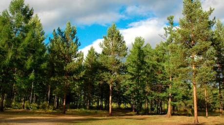 Україні необхідне комплексне вирішення проблеми лісу