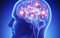 Мозг человека взрослеет значительно позже получения паспорта и разрешения на покупку алкоголя