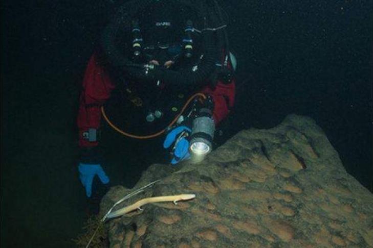 Подводники увидели на100-метровой глубине неповторимую «человеческую рыбу»