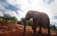 В Индии туристы еле сбежали от разъяренного слона (видео)