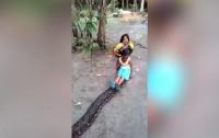 Индонезийские дети ездят верхом на сетчатом питоне (ВИДЕО)