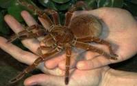 В Днепропетровске пройдет конкурс красоты среди пауков