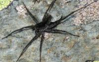 Британец нашел в стене офиса паука со светящимися челюстями