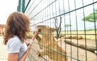 Звери чуть не погибли в зоопарке