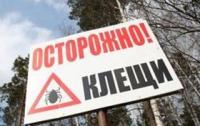 В России наблюдается небывалая активность клещей: искусаны сотни тысяч граждан