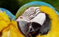 Попугаи-наркоманы терроризируют Индию