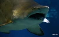 В Австралии убили четыре акулы за нападение на туристов