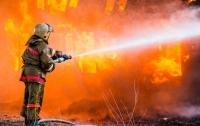 В Запорожской области заживо сгорела пенсионерка