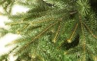 Киевляне сдали на утилизацию 10 тысяч новогодних елок