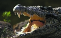 Флегматичный крокодил хотел позагорать вместе с отдыхающими