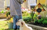 В США собака отказалась покидать могилу хозяина