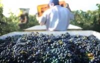 Грузия будет выращивать на Марсе виноградную лозу