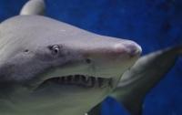 Сотни убитых акул нашли на шоссе в Мексике