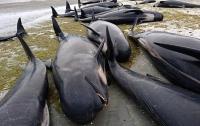 400 черных дельфинов выбросились на берег в Новой Зеландии (Видео)
