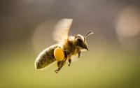 Художник создал искусственные цветы с пыльцой для пчел